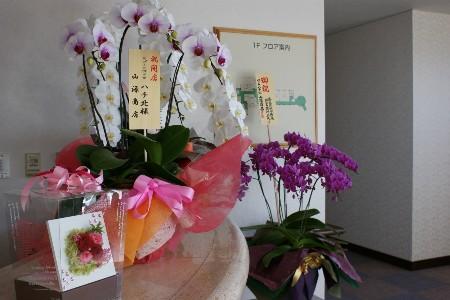 お祝いの花をいただきました