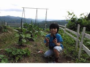 初収穫_JALAN_130706
