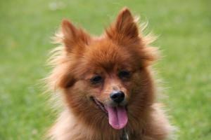 cute-dog-1362593345bn4[1]